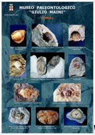 fossili_2_modif